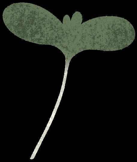 Micro green b
